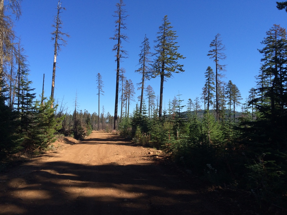 View from aid station at the 2015 Mountain Lakes 100